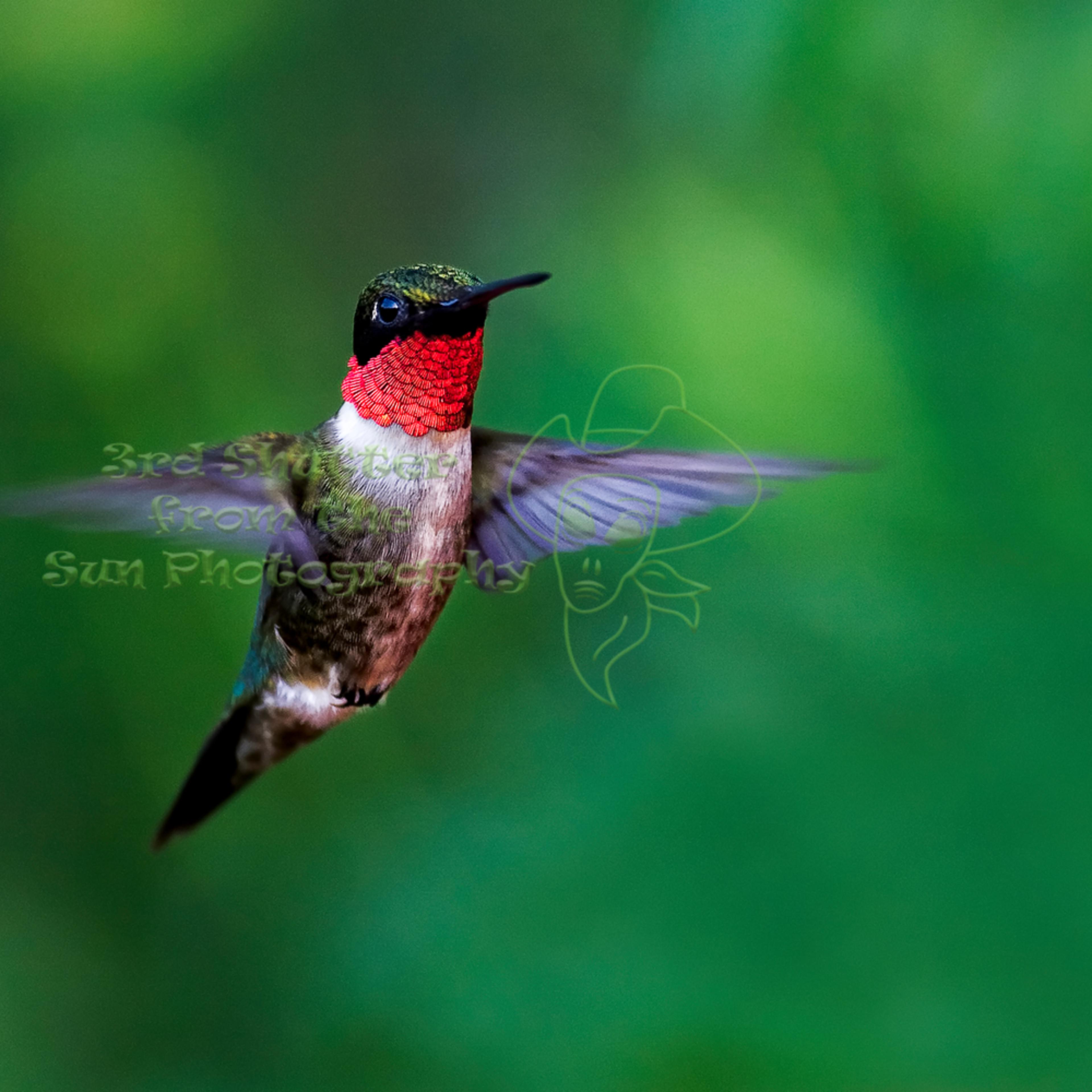 Hummingbird 7623 edit   ppa print edit zqs8da