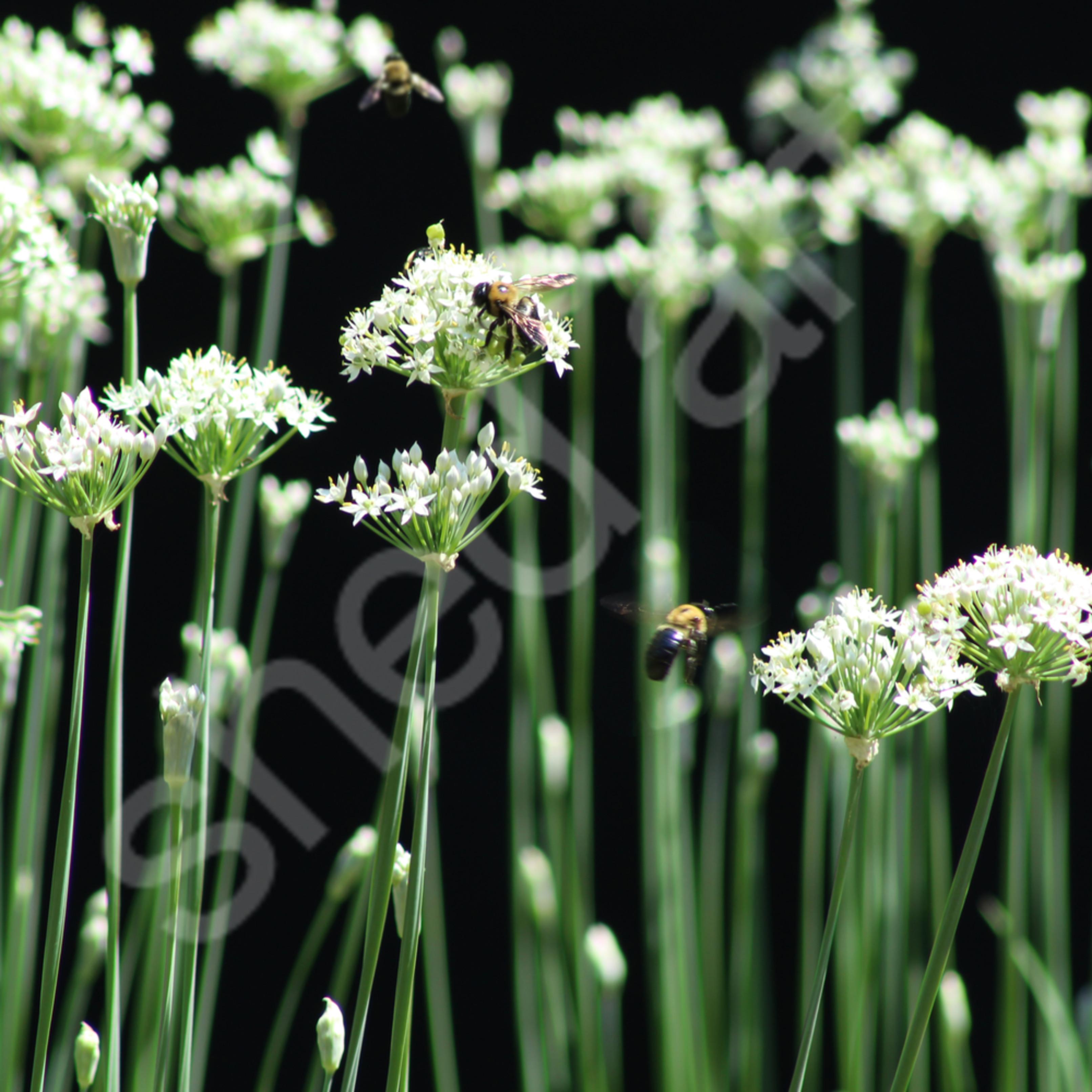 Bees3 n60st6