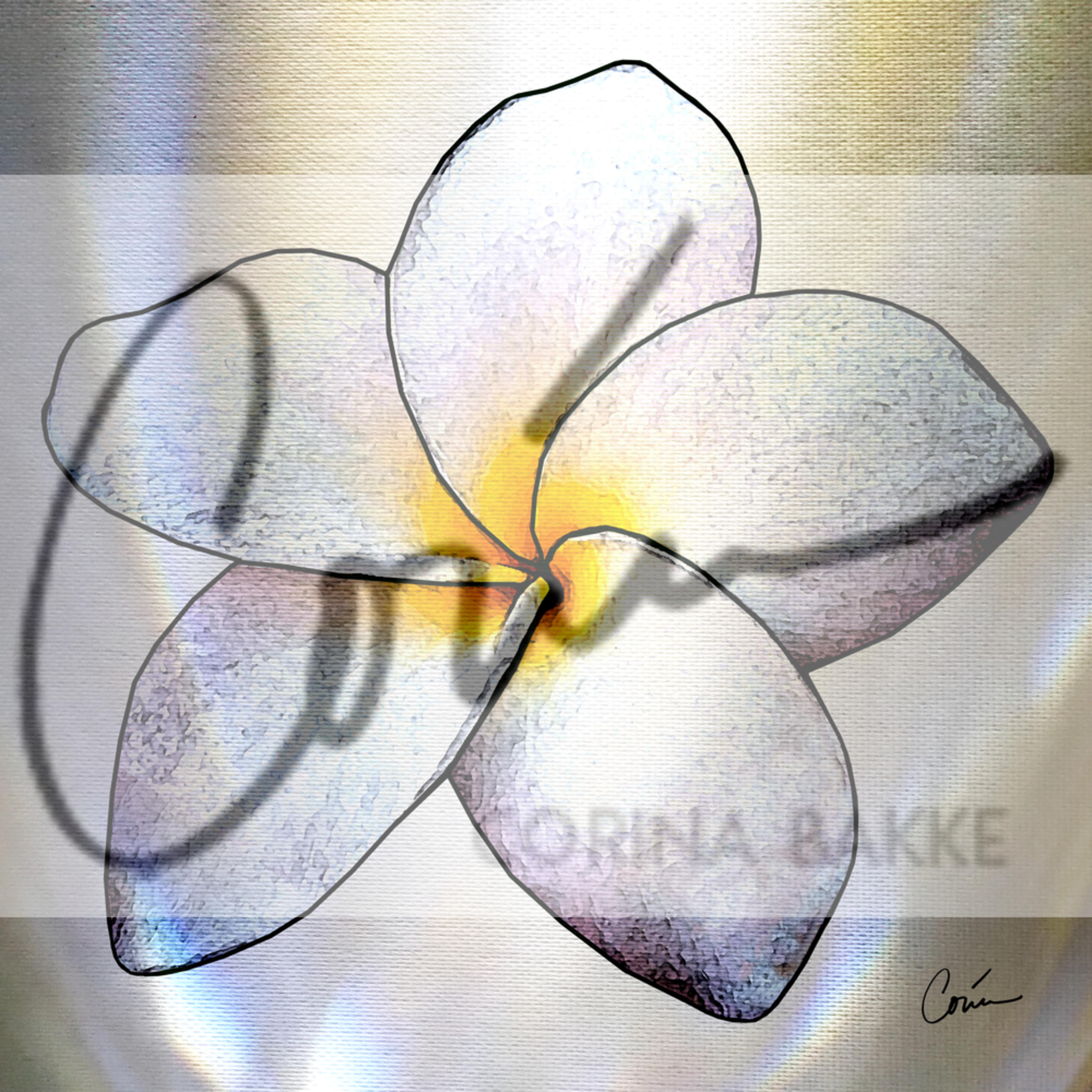 Corinabakke plumeria h81zag