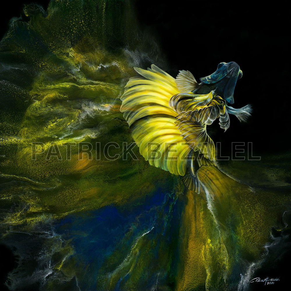Betta fish in the waiting yellow blue low svicot