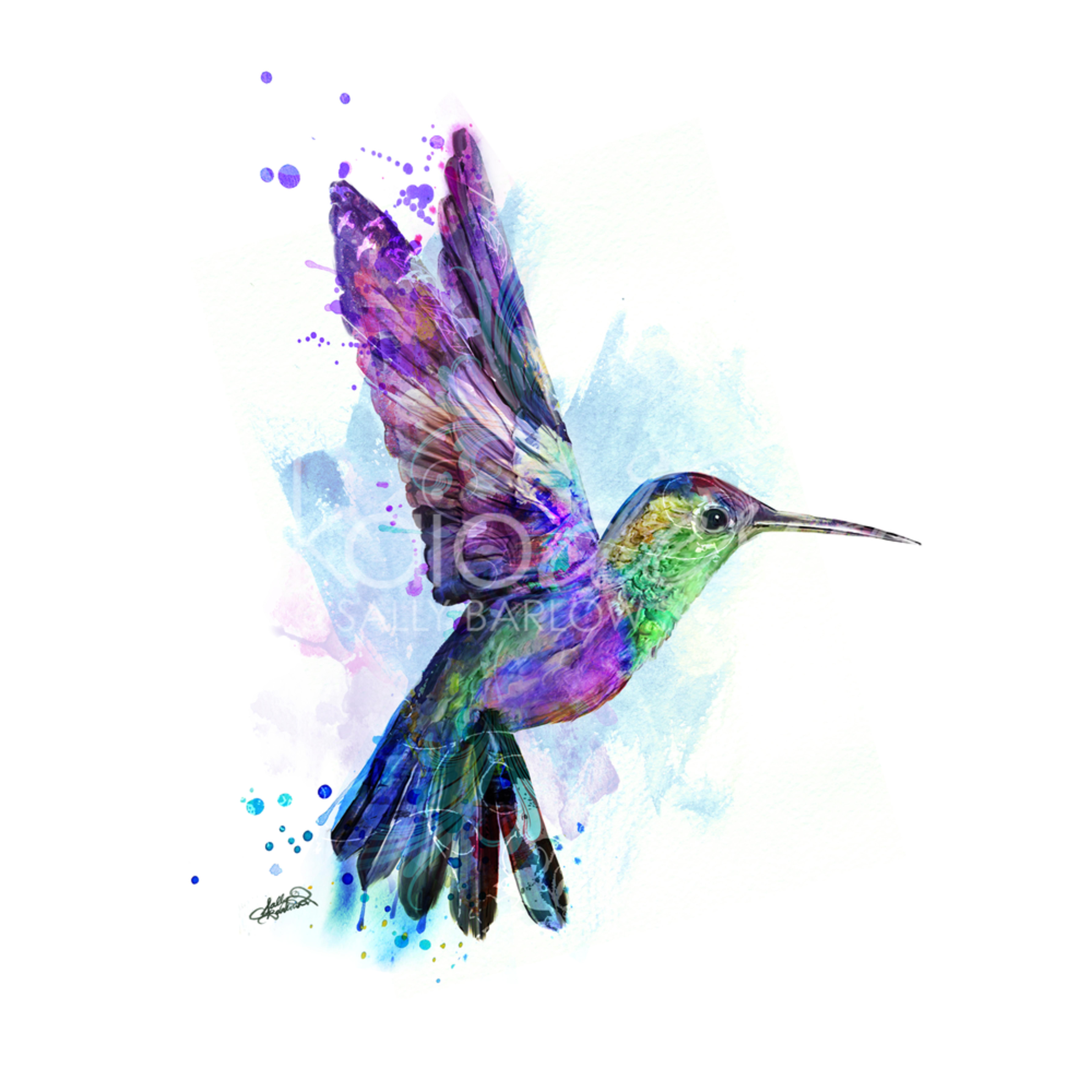 Hummingbirdsq zurrry
