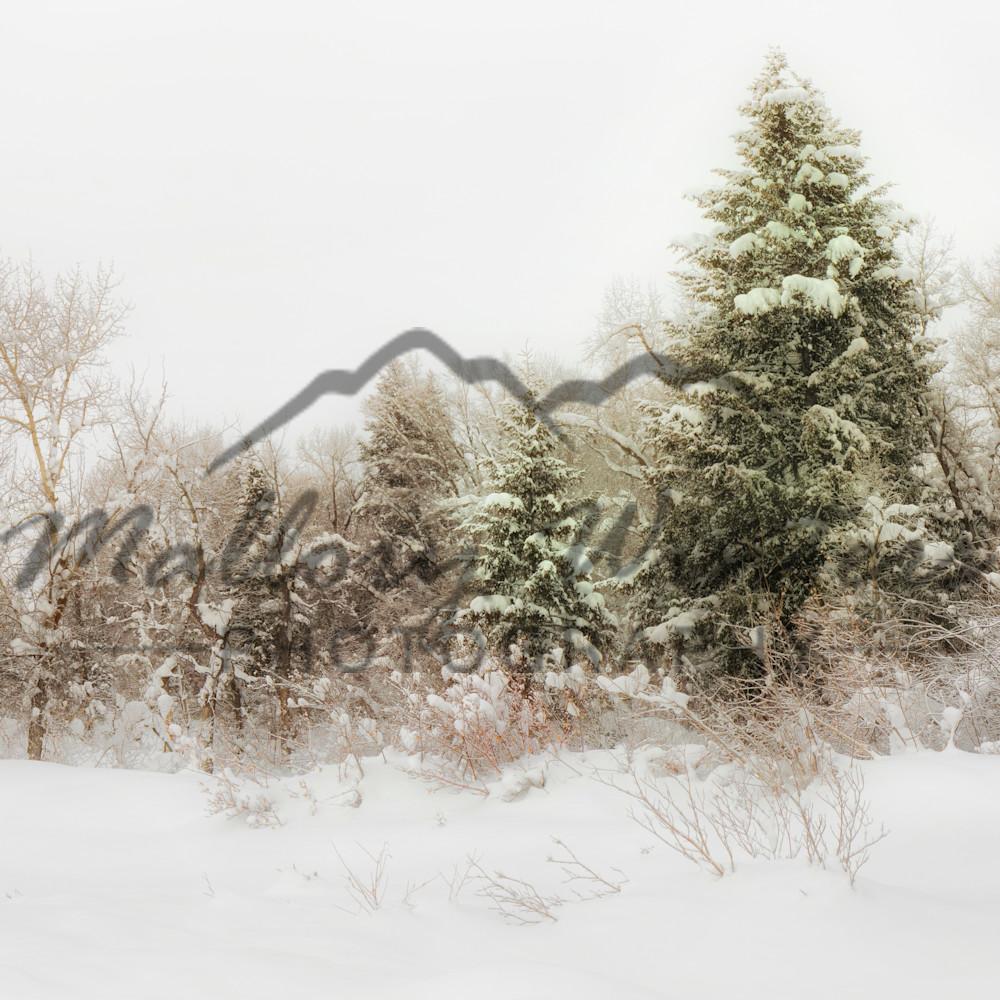 Peaceful winter hwwysr