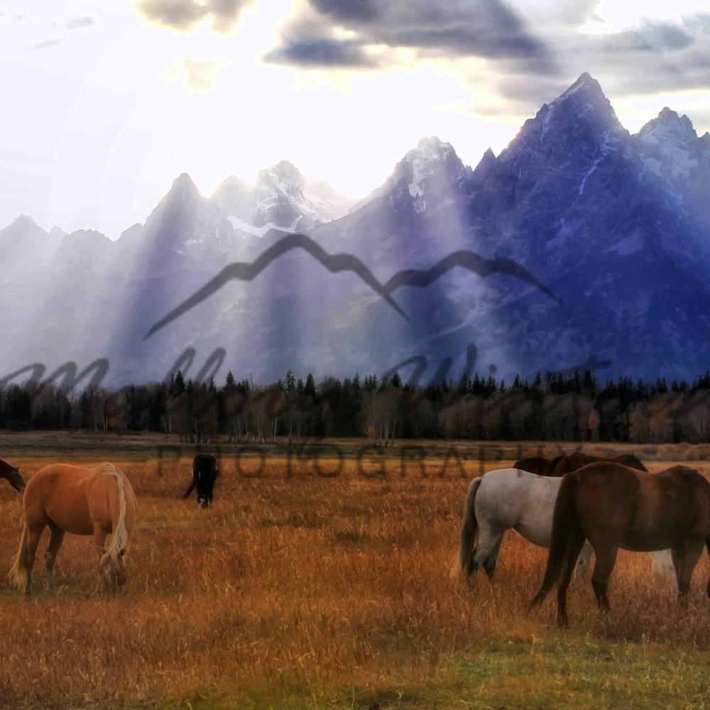 Horses final lu890n