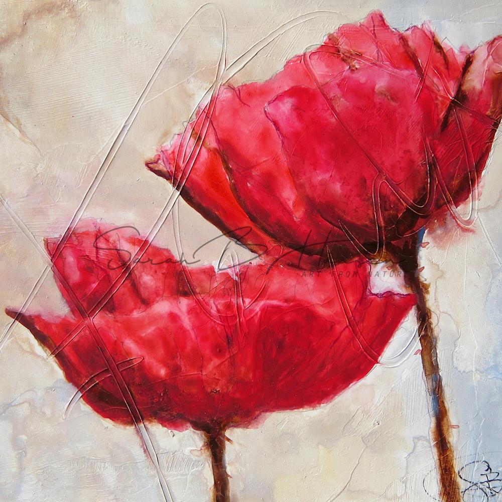 Poppies ol7s2c