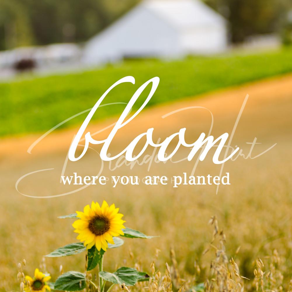 Bloom ody8z0