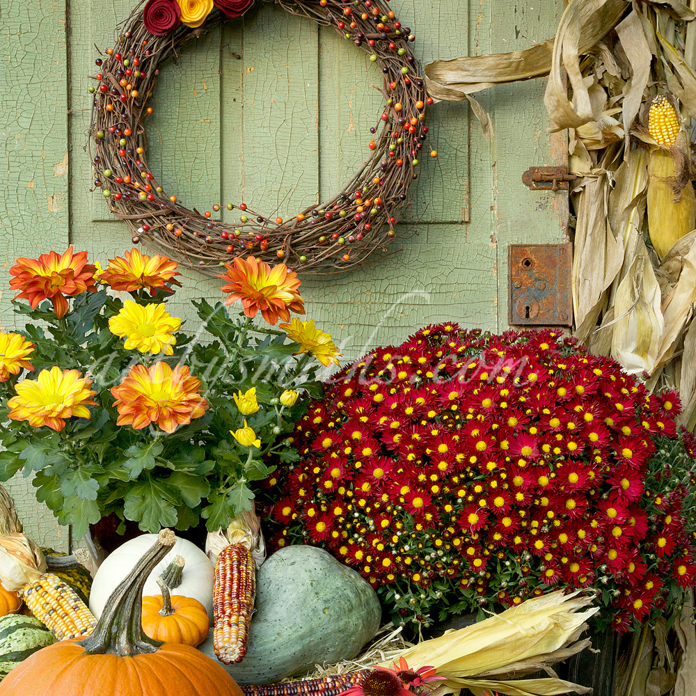 Festive fall flowers still life nz3twr