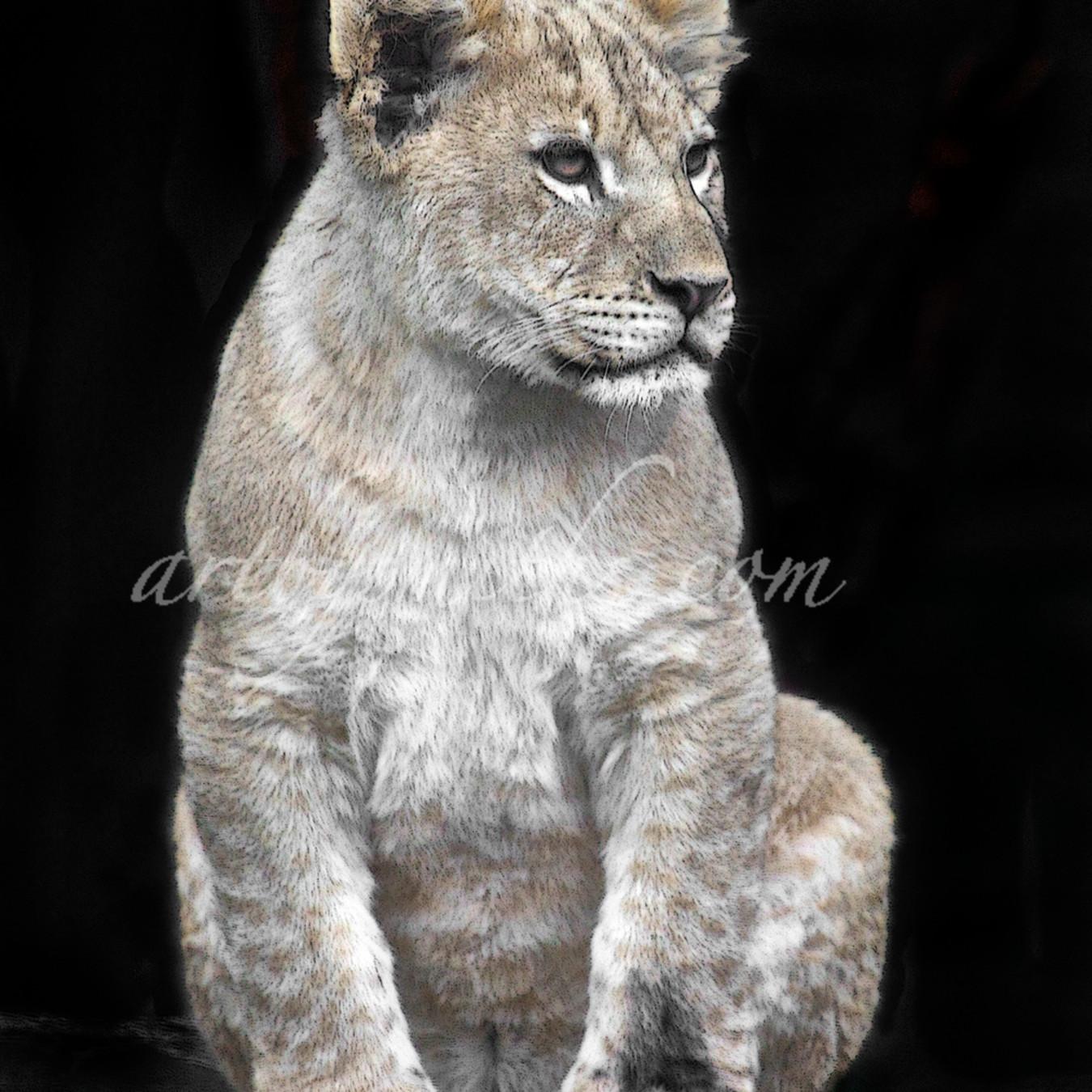 Lioncubvertc jx5zda