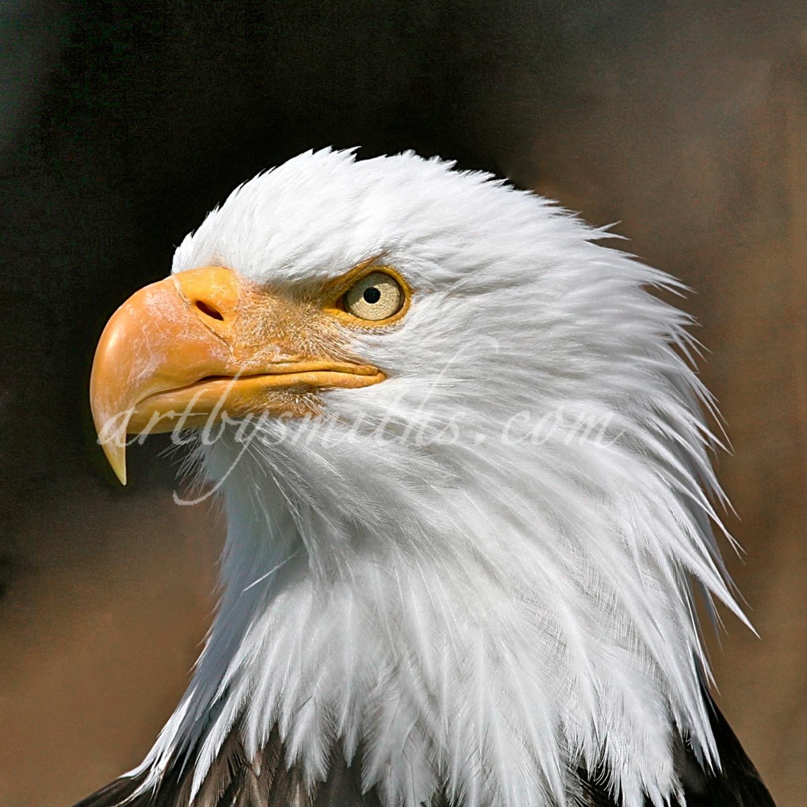 Eagleportraitc bgte36