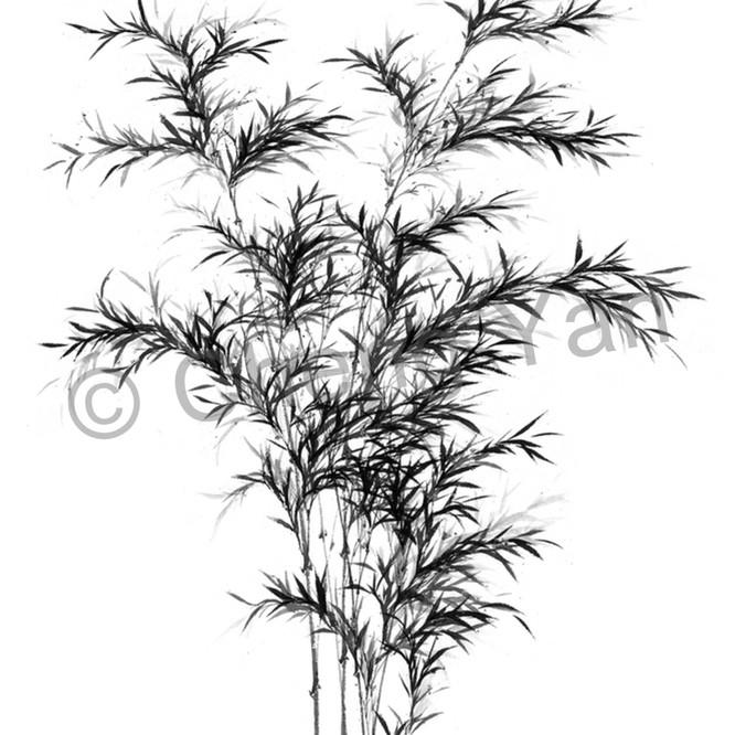 Bamboo 002 eipkc6