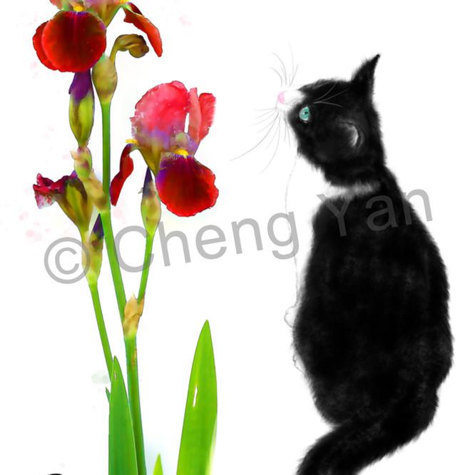 Cats 062 jdwft5