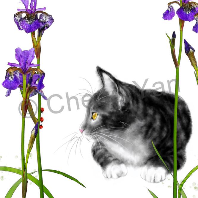 Cats 068 r3fmdh