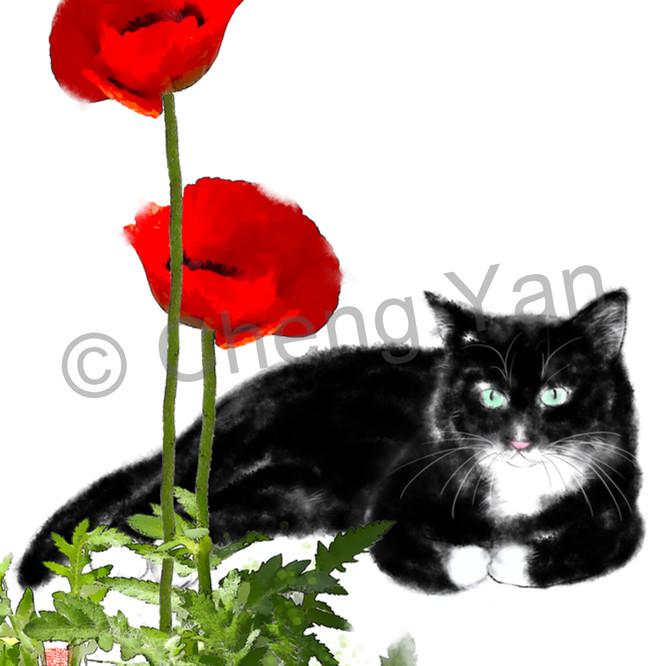 Cats 101 rxrexq