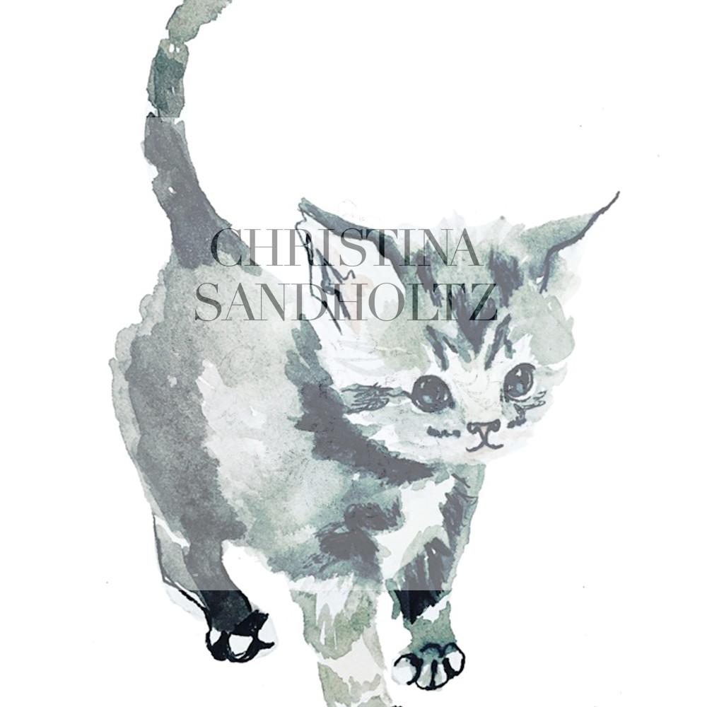 Gray kitten yjlumt