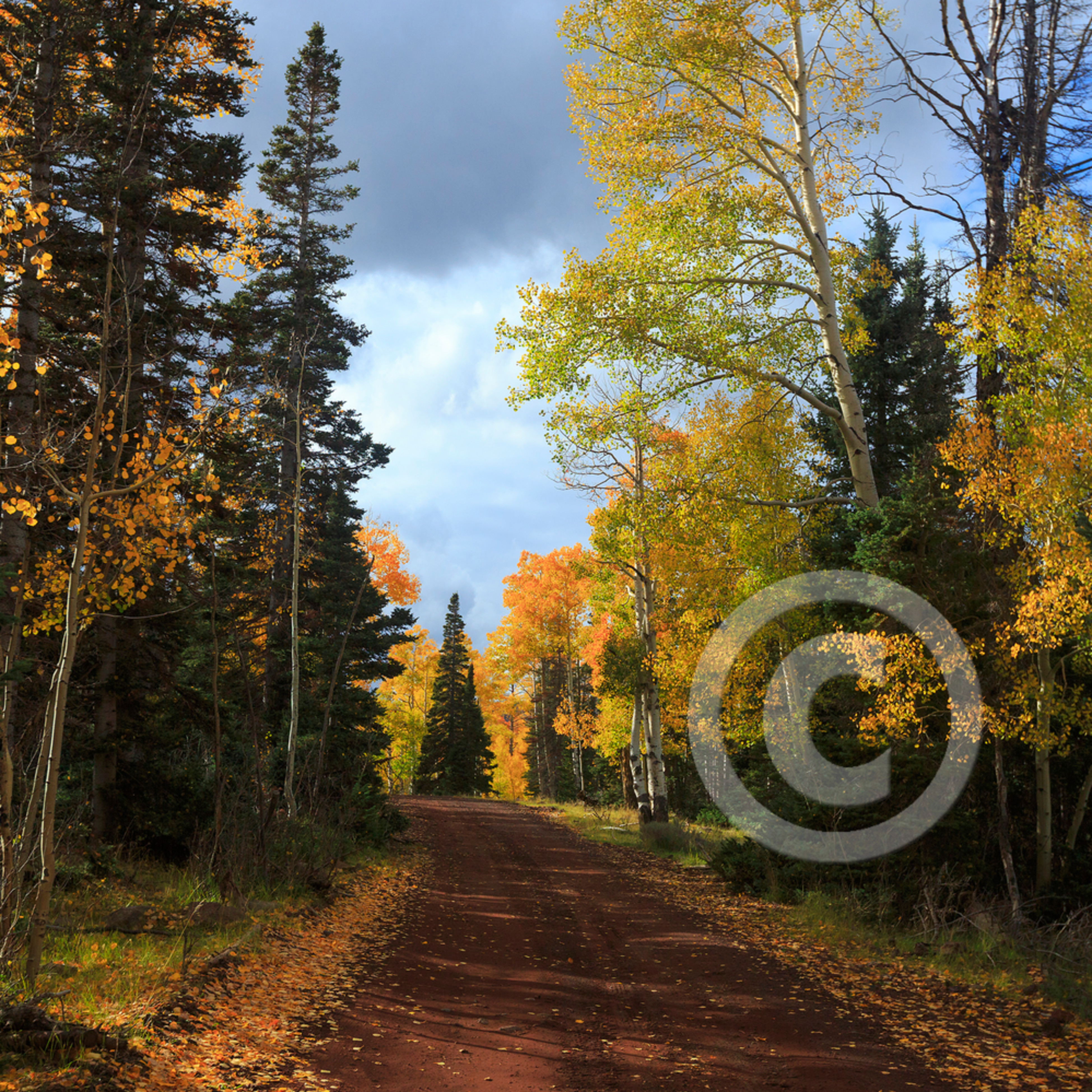 Mj20140929 3357 autumn pathway zlw7xq
