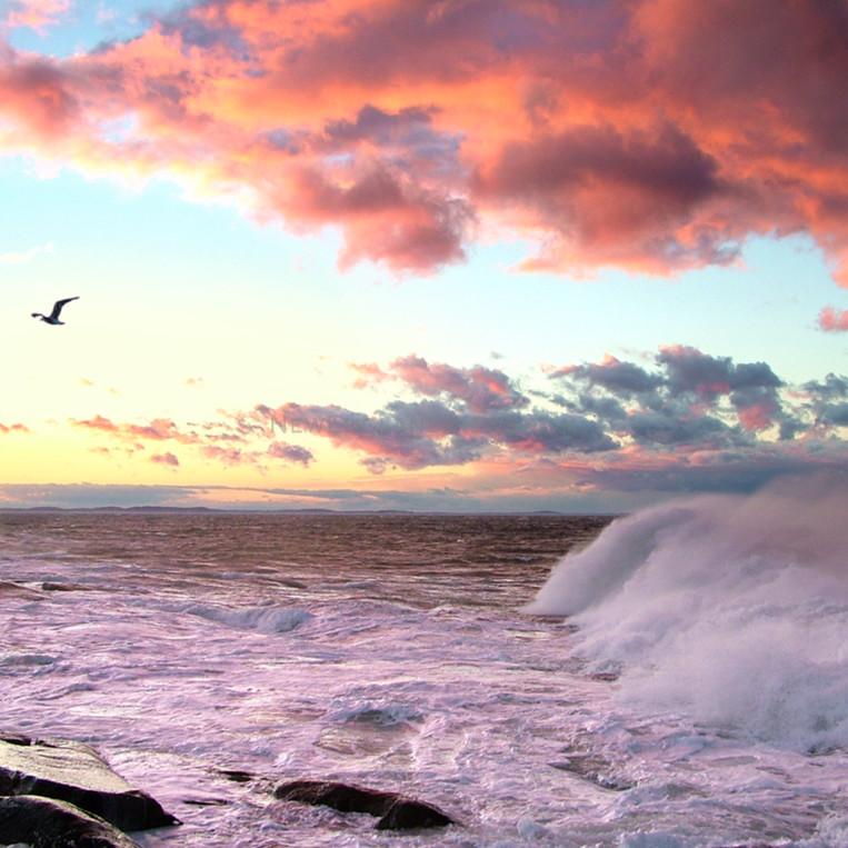 Big waves pink clouds gull sunset seascape jbpzf6
