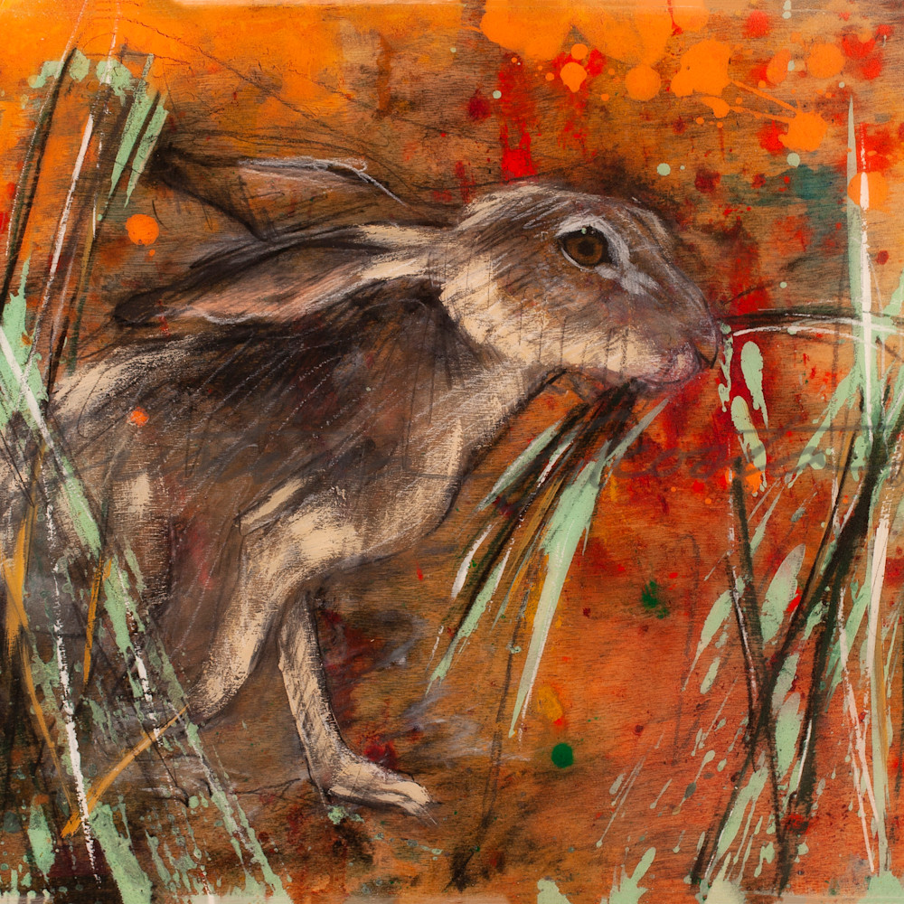 California poppies hare in grass zxbeph