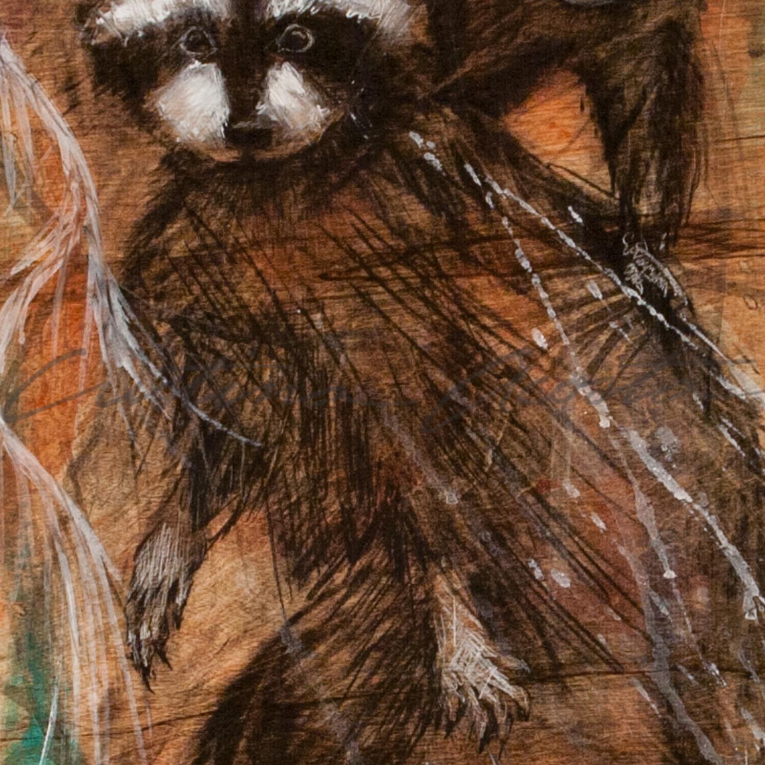 Raccoons dionwv