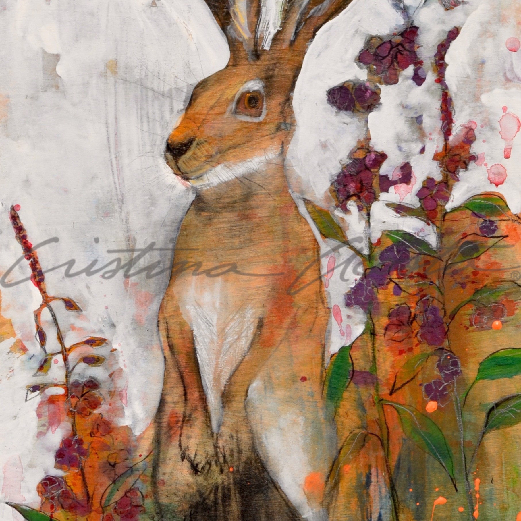 Hare jackrabbit watchful nvp11r