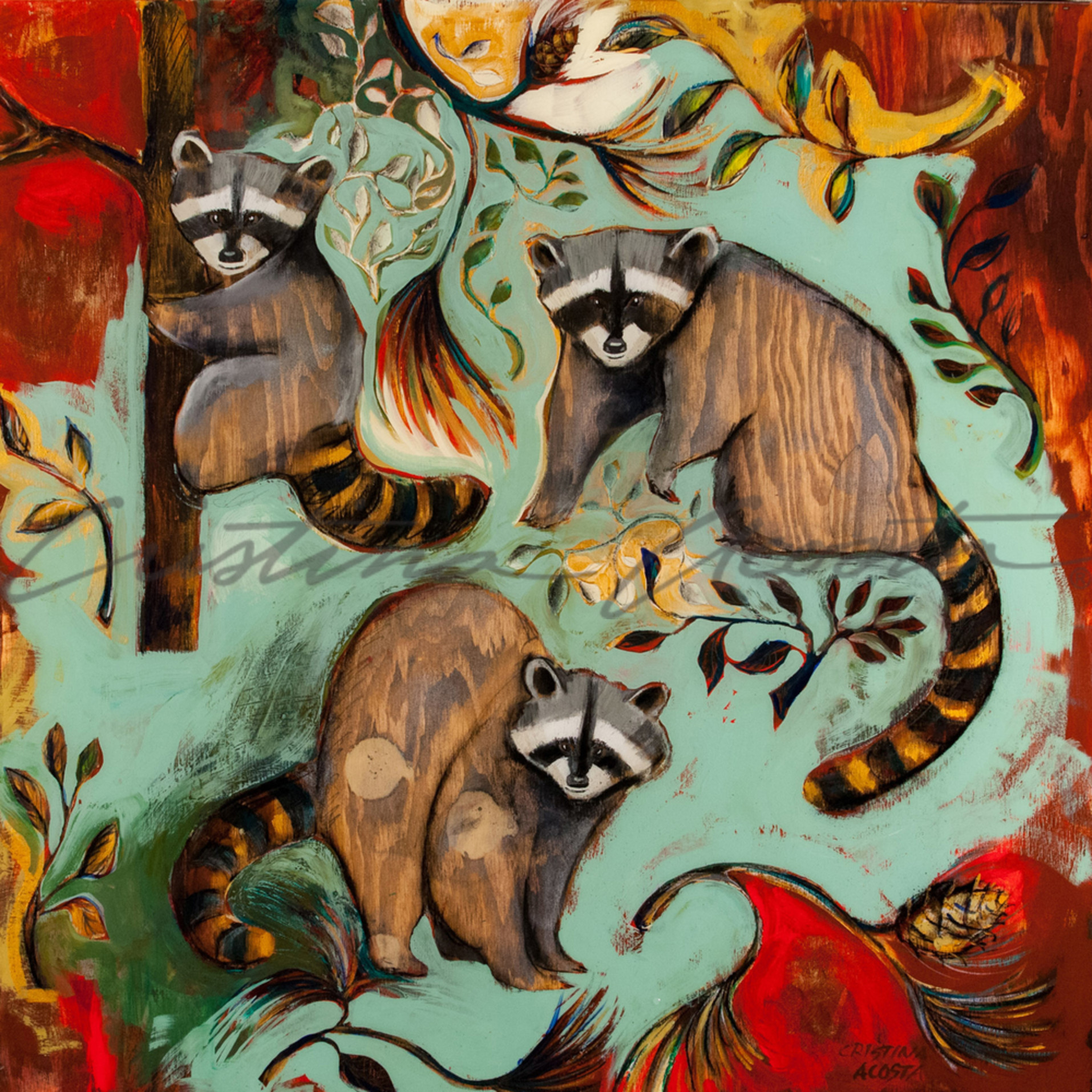 20150131 woodlands raccoons 8 olxdqr