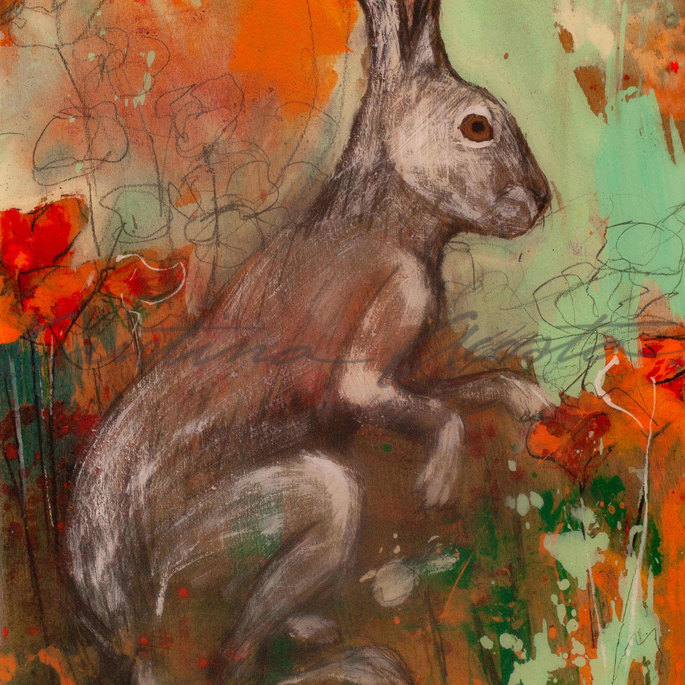 California poppies hare 3 gocqmj