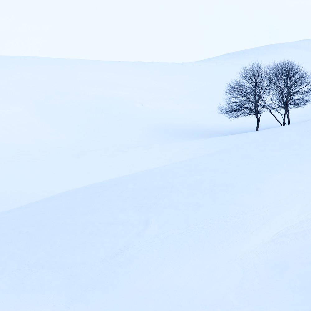 Mbp apple trees 20120218 6604 hsne4t