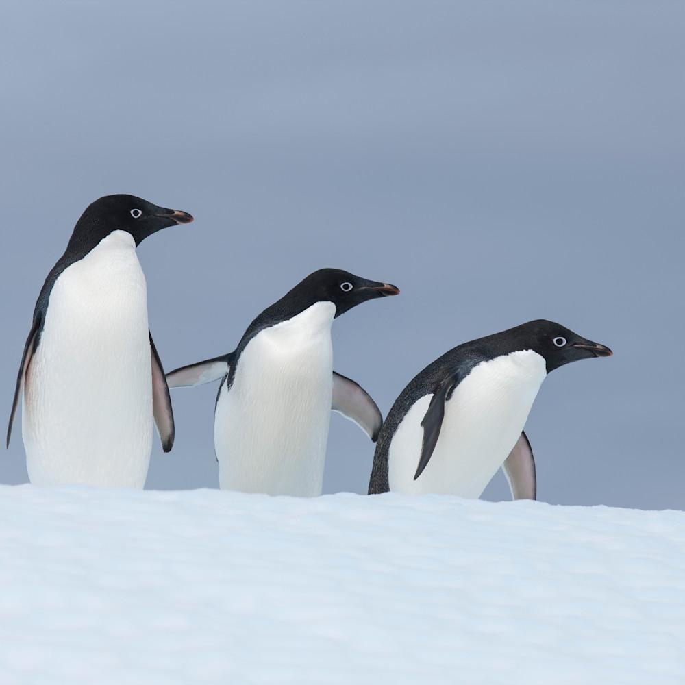 Mbp antarctica 20121212 7854 qhenhs
