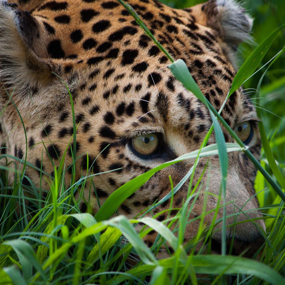 20101215 leopard02 img 1969 kmap2l