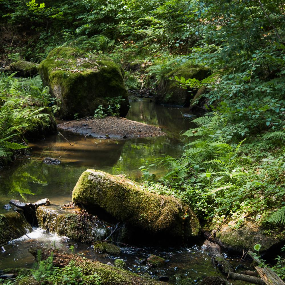 20100626 creek in czech republic img 4033 tzukel