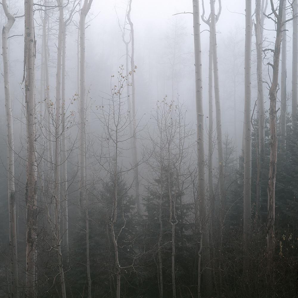 Aspens and fog gym5js
