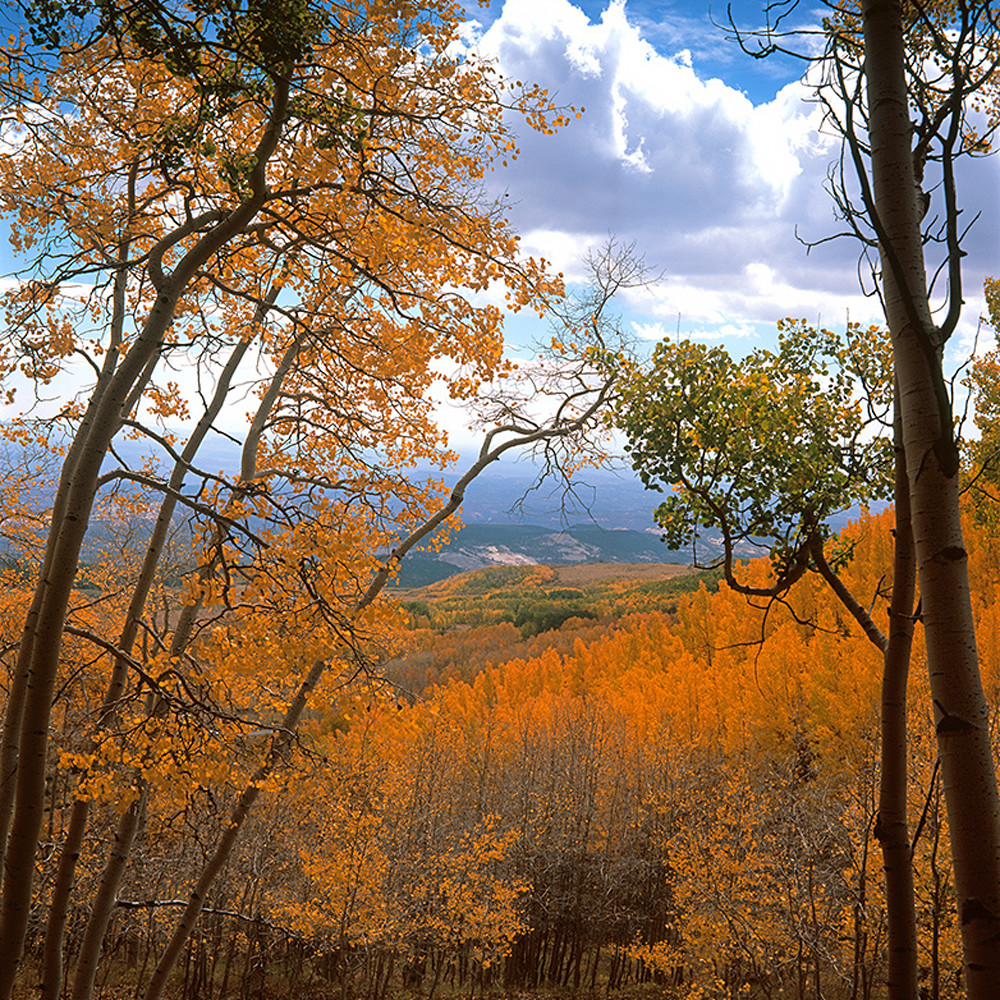 From the aspens cwno0g