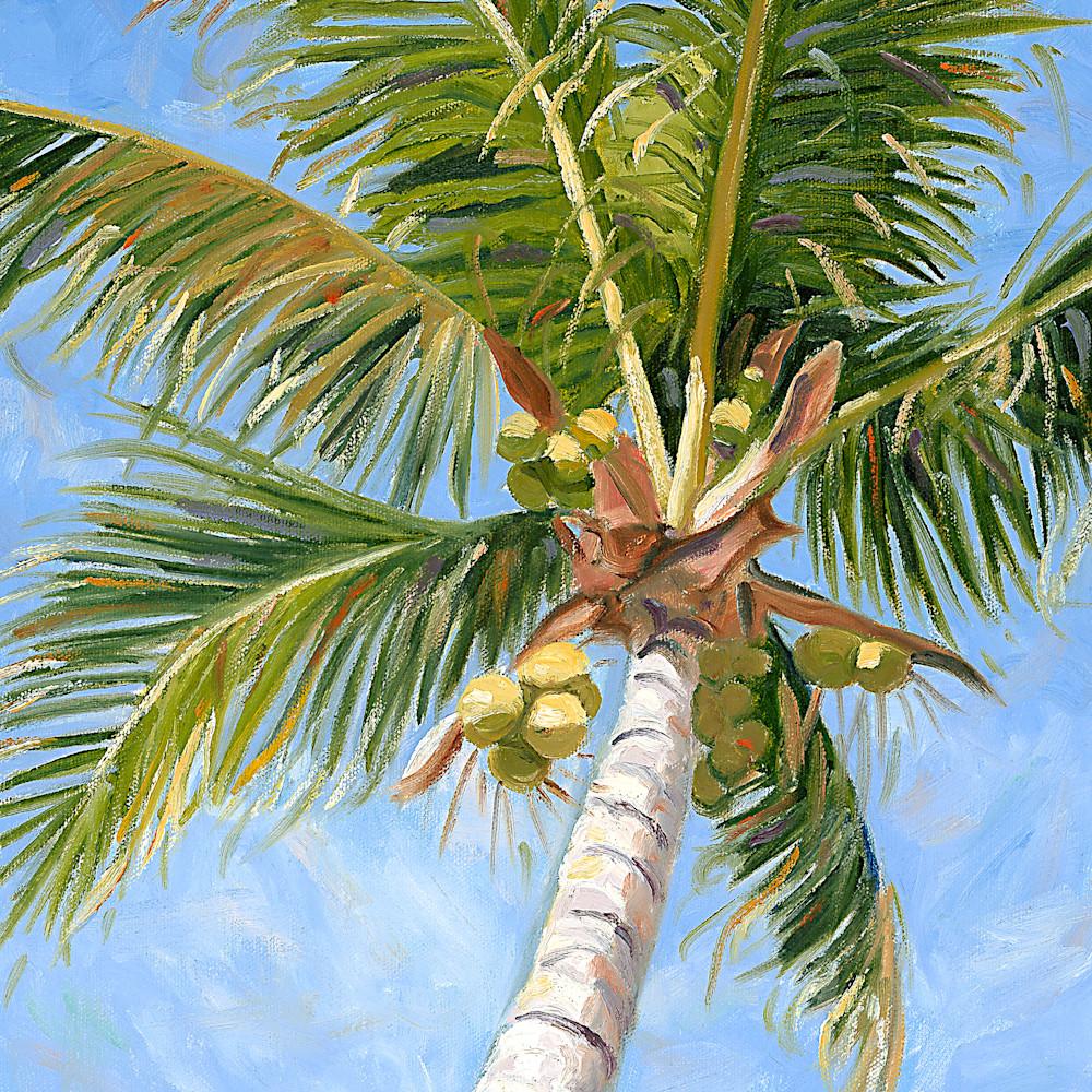Coconut palm jtyia1