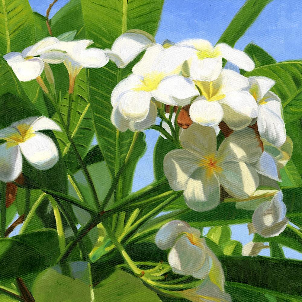 Plumeria uiwcu7