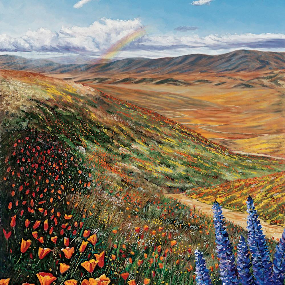California golden poppies uhidoi