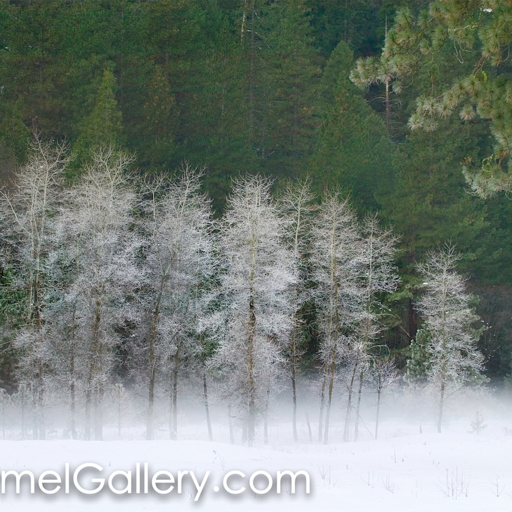 Morning frost c9bhwe