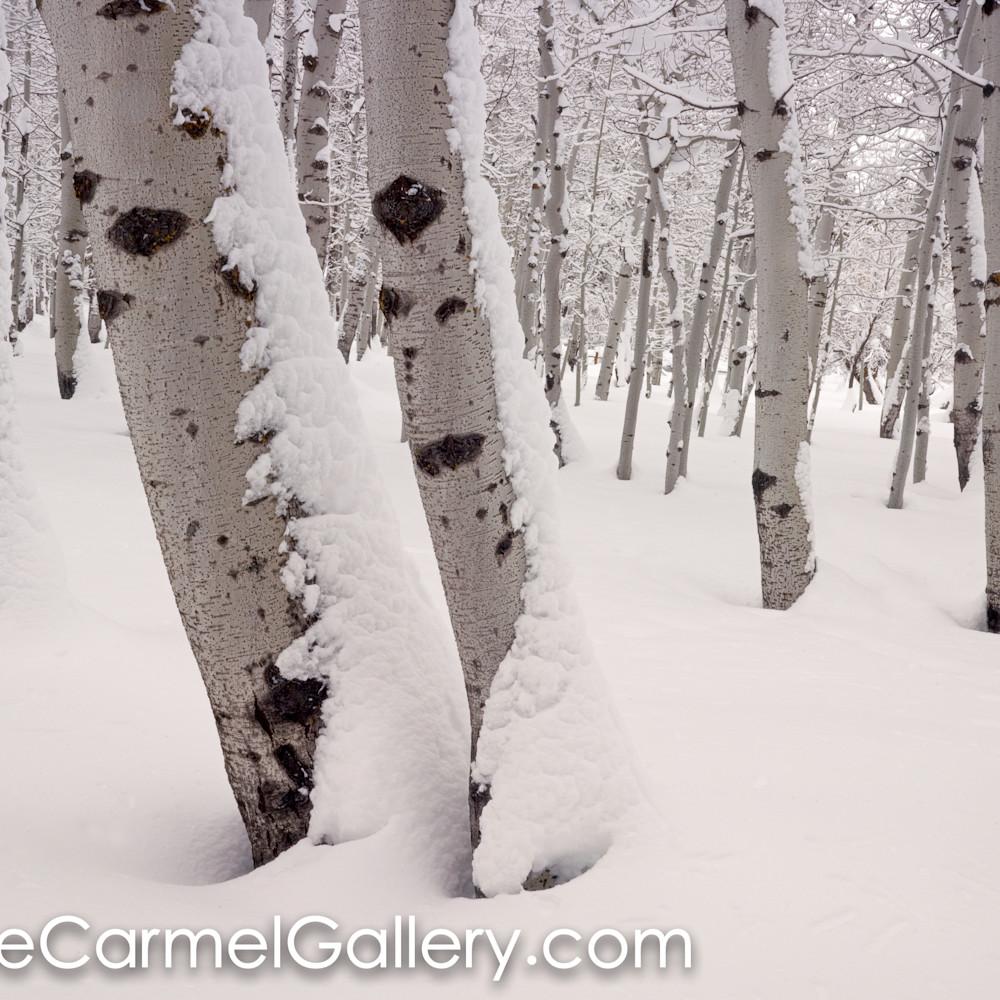 Aspen forest in winter hrhuup