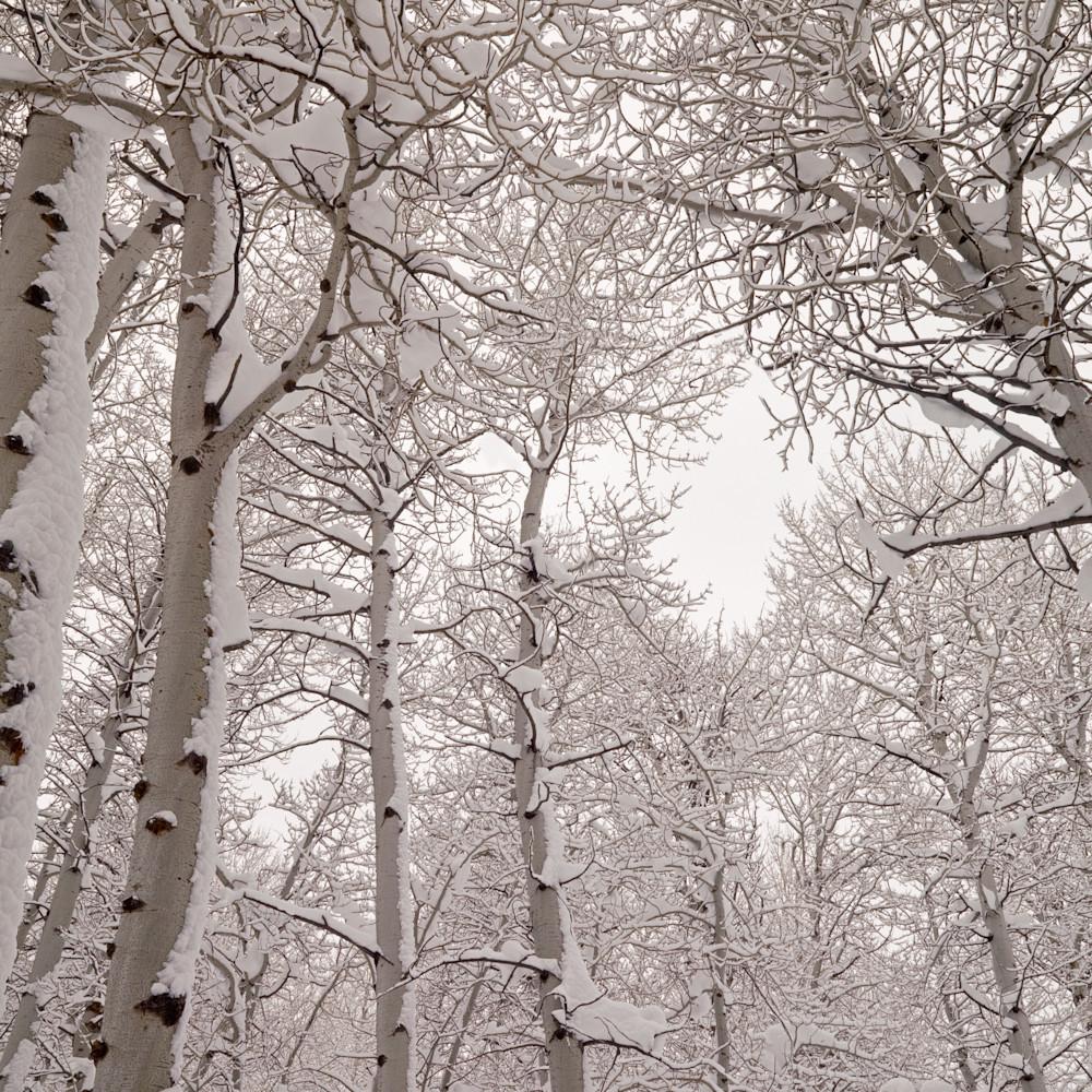 Aspens snow viwxal