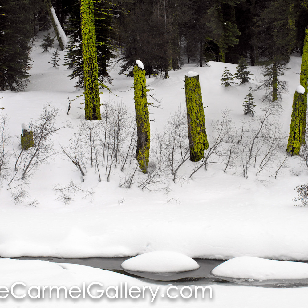 Moss snow yzavt0