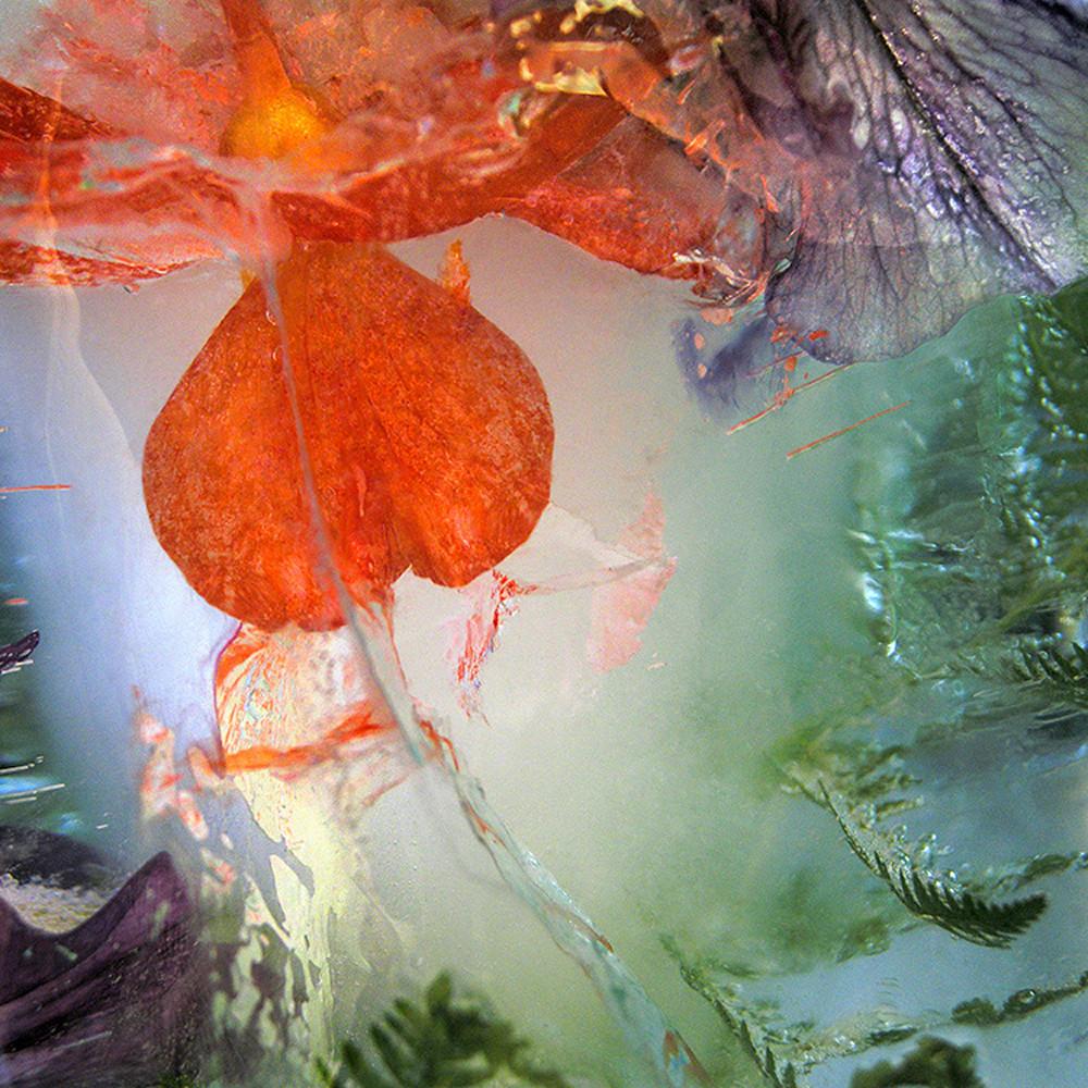 Icescape geranium bbb0eq