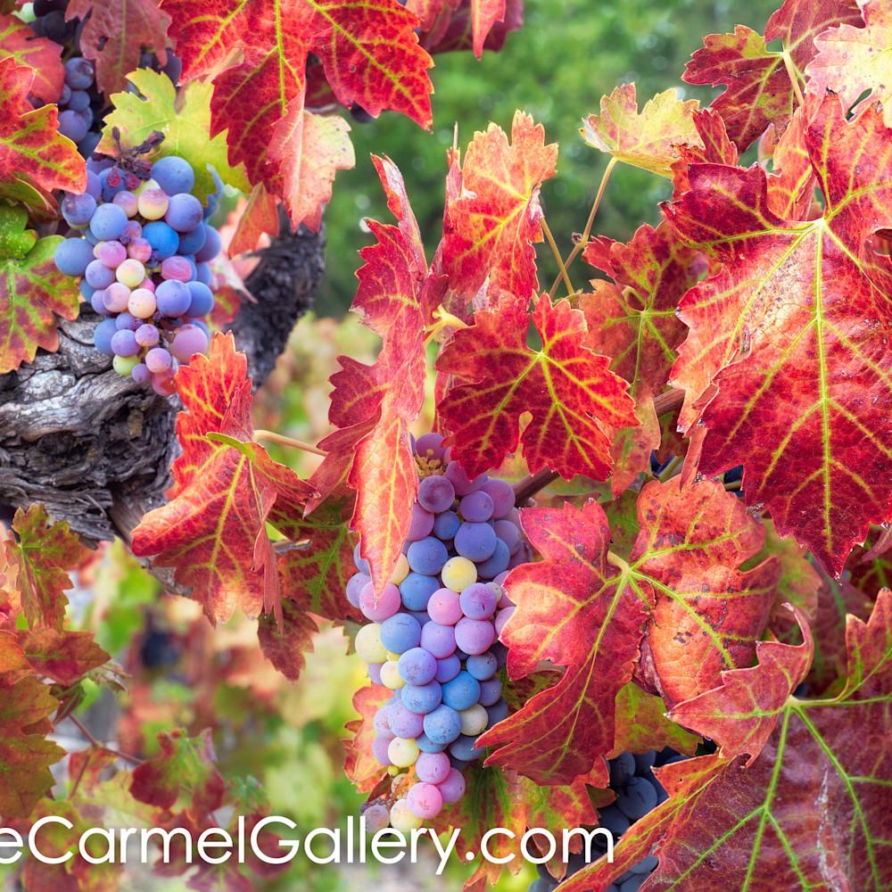 Autumnchanges fsrszu