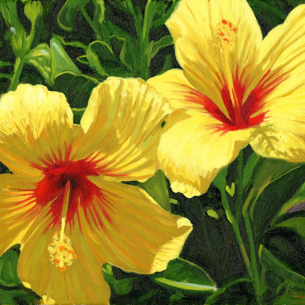 Yellow hibiscus zxoc6n
