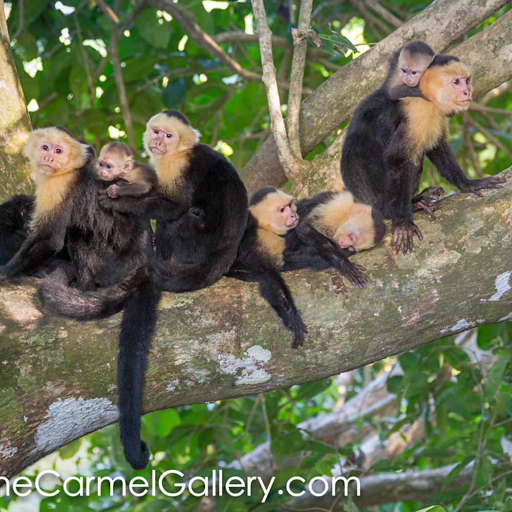 Rain forest monkey family lf6fns