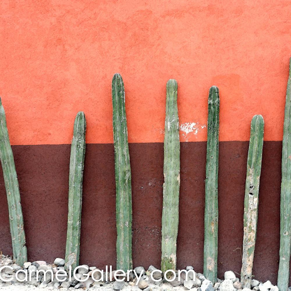 Cactus row aujwcy