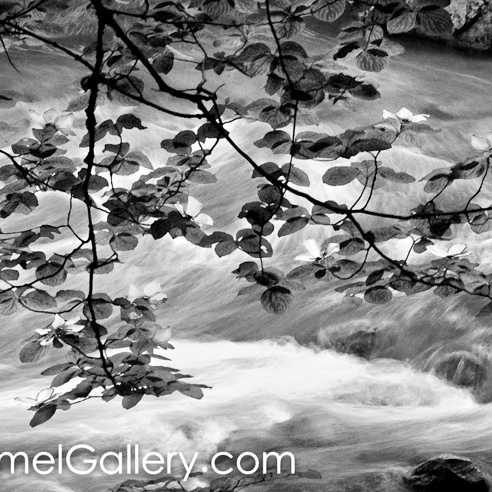 Along the river bank yuplv4