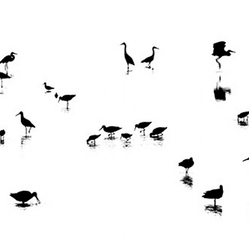 Wading bird heaven h7vlp9