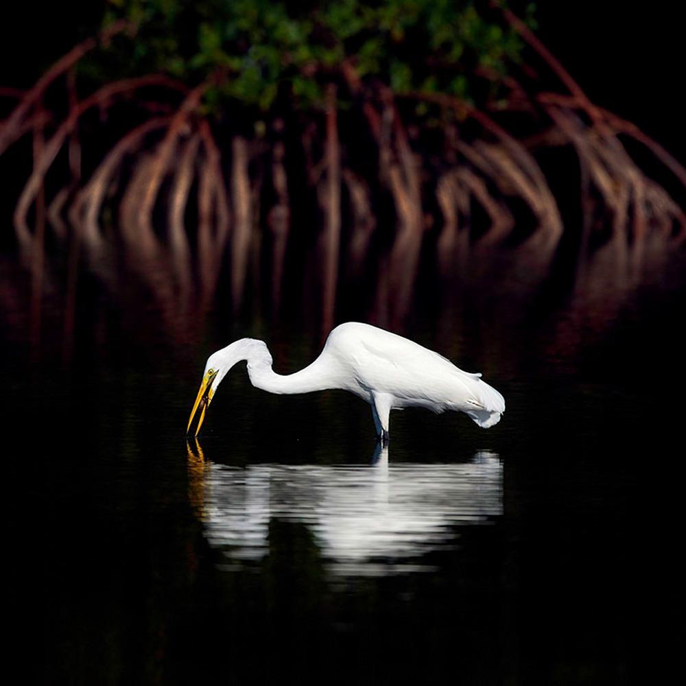 Mangrove background y4e9vr