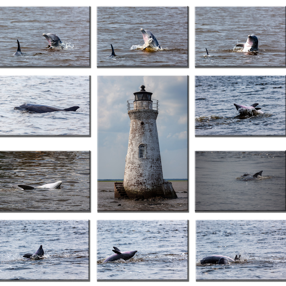Dolphin collage ekp4ga