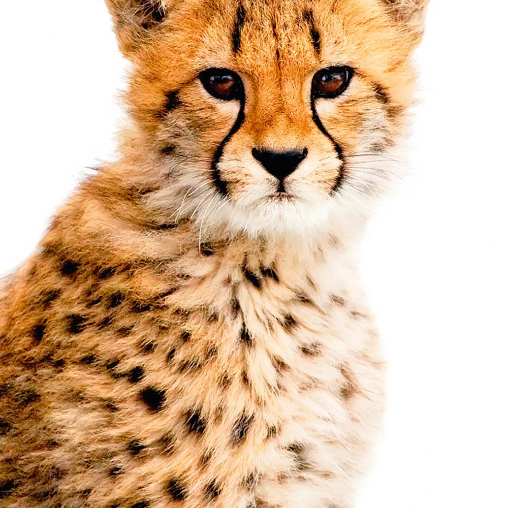 Cheetahs 006 nrqzwz