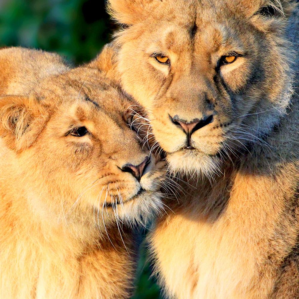 Lions 004 mwxwwb