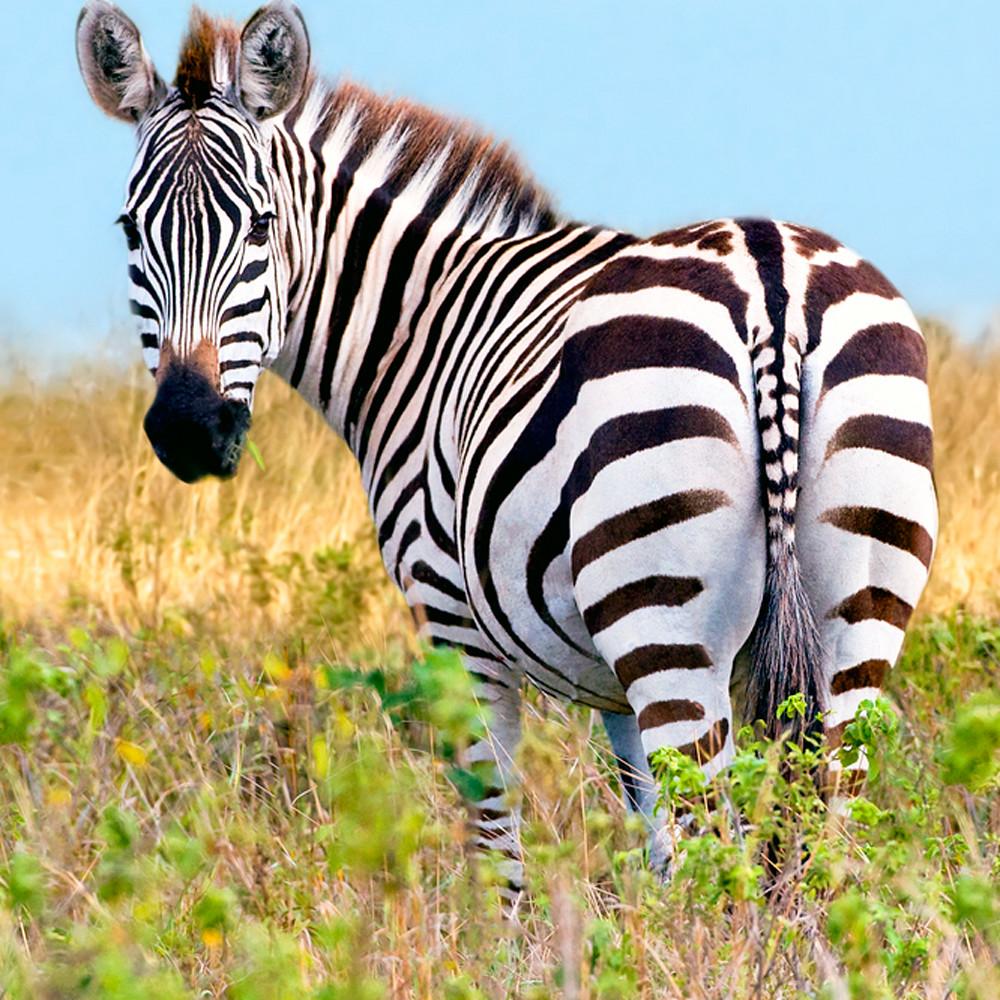 Zebras 001 fmnqah