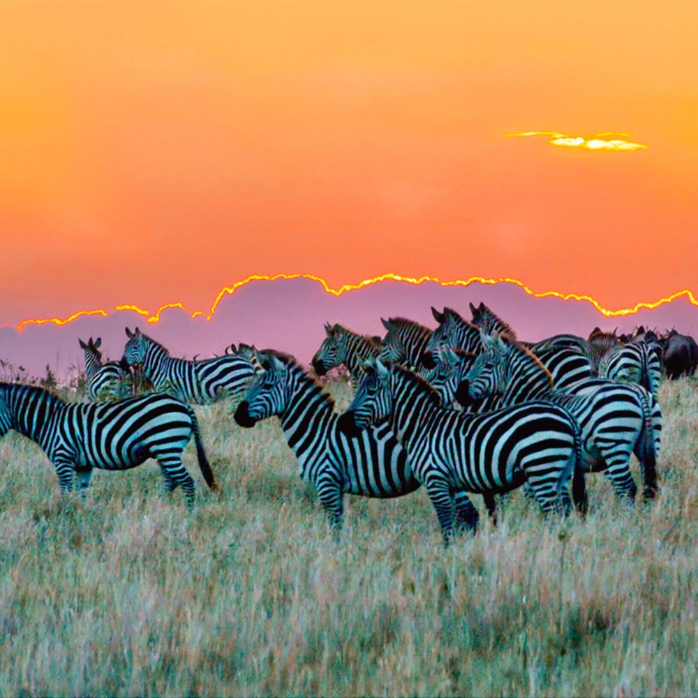 Zebras 005 asulrf